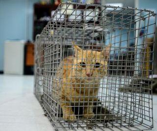 mačka v kletki