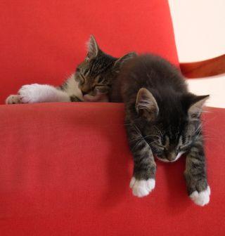 relaxamento do gato