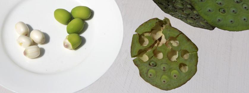 nueces de loto frescas